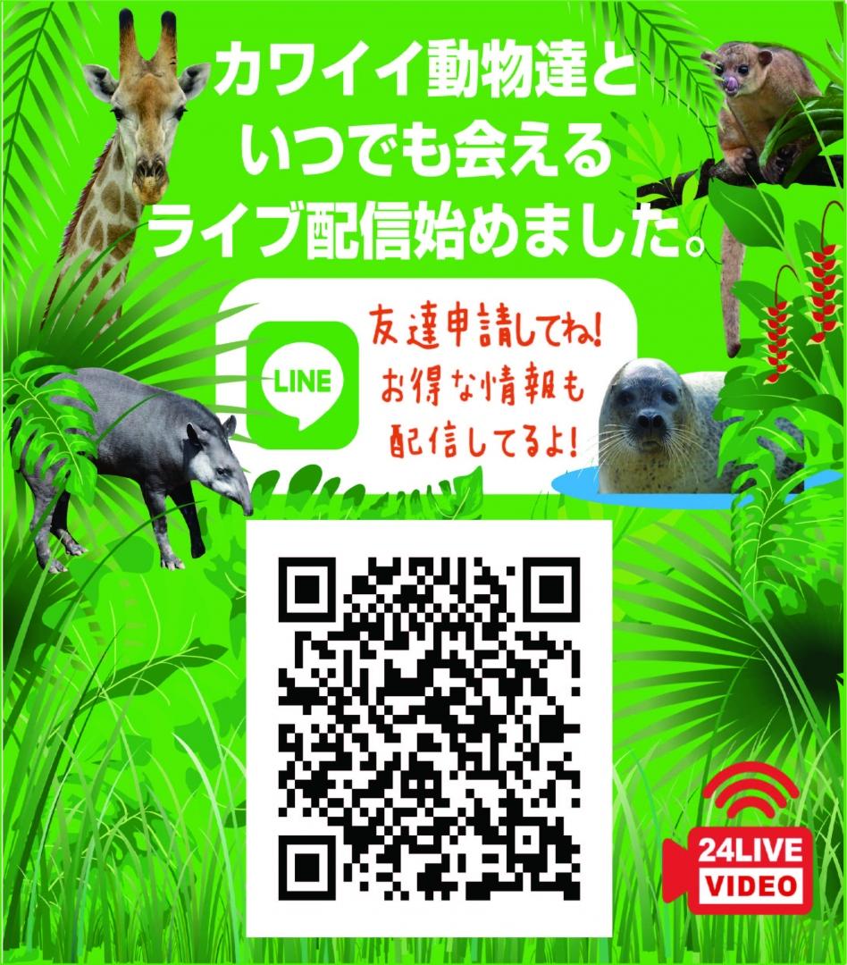かわいい動物たちにいつでも会えるLIVE配信はじめました!!